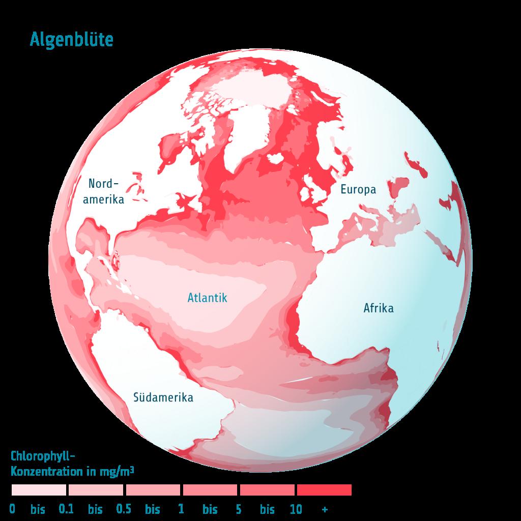 Algen Atlantik